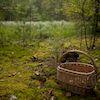Заблукала в лісі