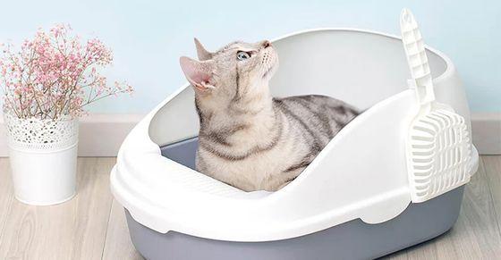 Популярные виды лотков для котов