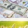 Ринок землі пожвавився разом із цінами: скільки тепер коштують ділянки в Україні